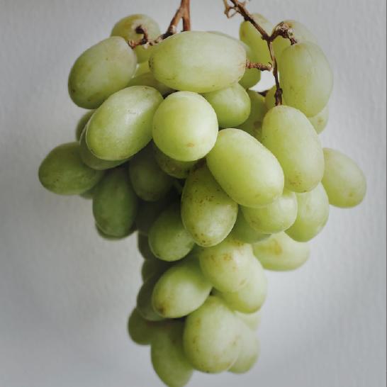 ultimate-gift-guide_sponsor-vineyard